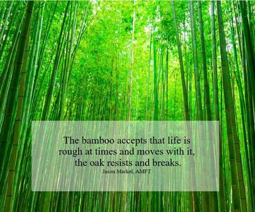 Blog Spiritual Teachings of Trees: Be Strong But Flexible